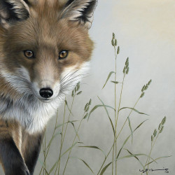 Fox - British Wildlife Series