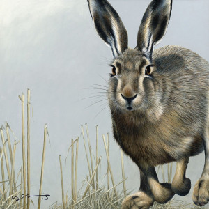 hare - british wildlife series - board with slip