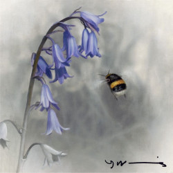 Bluebell - Buff Tail Bee - Original