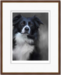 Border Collie (40th Anniversary Image) - Framed