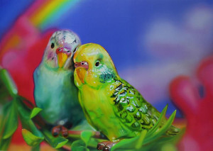 budgie love - print only