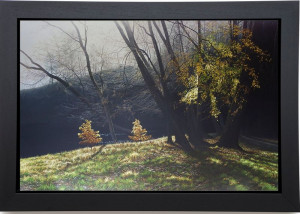 Depths Of Autumn - Deluxe Canvas - Black Framed - Framed Box Canvas