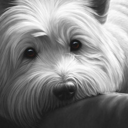 Dog Tired Series - West Highland Terrier - Box Canvas