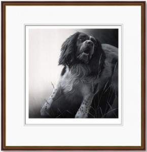 field sports - springer spaniel  - framed