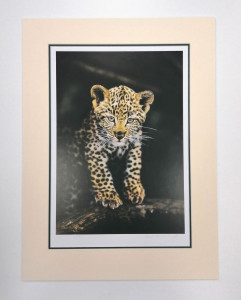 First Adventure - Leopard Cub - Edition No.1 - Mounted