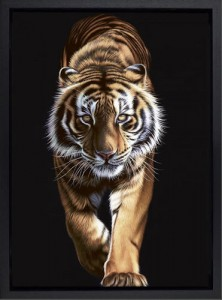 on the prowl - framed - box canvas