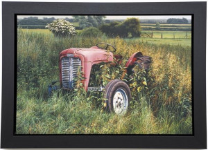 Out To Grass  - Framed Box Canvas