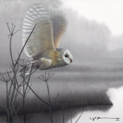 Owl - Taking Flight - Original