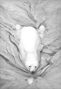 Polar Bear Swimming - Print