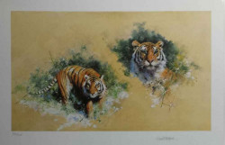 Siberian Tiger - Black Framed