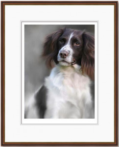springer spaniel (40th anniversary image)  - framed
