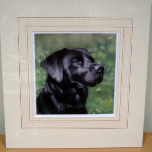 Study Of A Black Lab - Original - Mounted