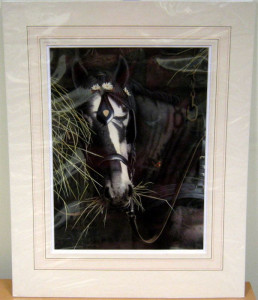 Study Of A Horse - Original - Mounted