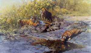 The Tigers Of Bandhavgarh - Print only
