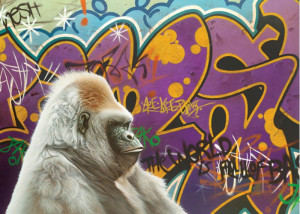 Urban Gorilla - Canvas - Black Framed - Framed Box Canvas