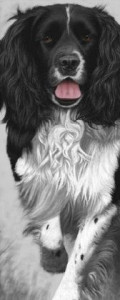 Walk Tall - Springer Spaniel - Print