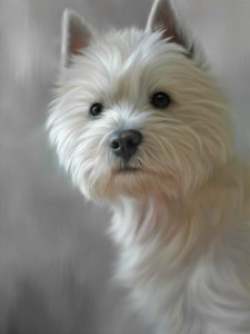 west highland terrier (40th anniversary image) - print only