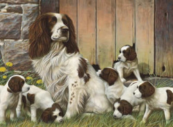 Dad's Army - Springer Spaniels (Original)