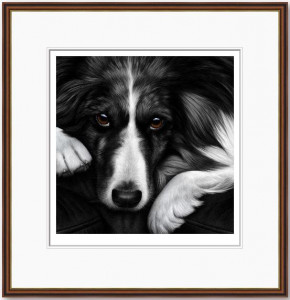 dog tired series - border collie  - framed