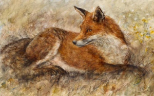 Red Fox Waiting - Board Only