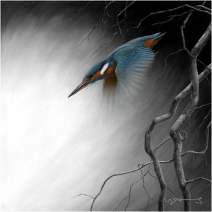in flight - kingfisher - canvas with slip