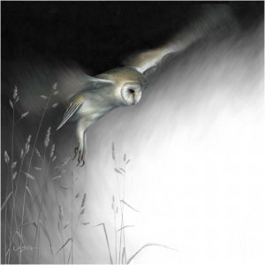 in flight - barn owl - canvas with slip
