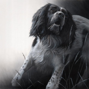 field sports - springer spaniel (original) - box canvas