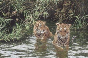 Swimming Lesson - Tigers - Mounted