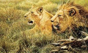 African Gold - Lion, Lioness - Mounted