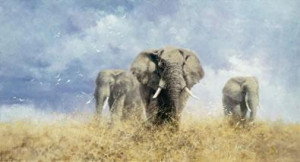 Savuti Elephants
