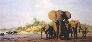Evening In Africa (Elephants, Hippos) - Print