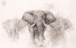 Elephants - Pencil Drawing