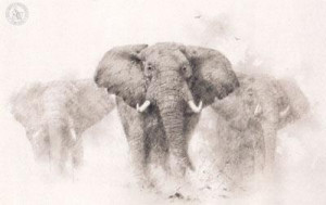 Elephants - Pencil Drawing - Mounted