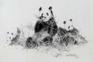 Panda (Pencil) - Mounted