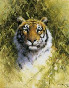portrait of a tiger - print only