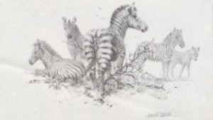 Zebra (Pencil) - Mounted