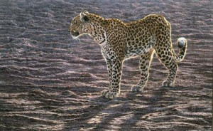 okavango apparition - canvas - with slip