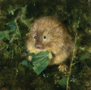 water vole - mounted