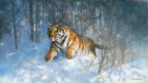 Tiger In The Snow - Print