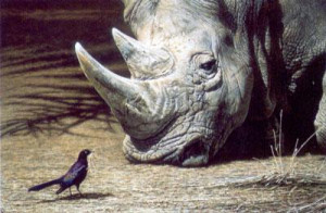 what nest? - rhino & bird - print only