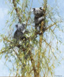up a gum tree - koalas - print
