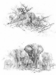 Portfolio Set I - Cheetahs & Elephants (Set of 2) - Mounted