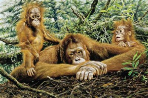 but this is our home - orangutans - print only
