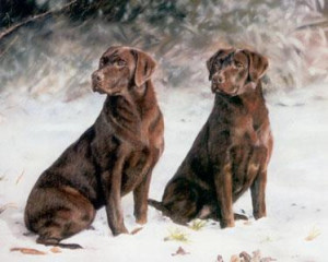 choc ice - chocolate labradors - framed