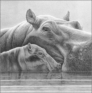 baby love - hippos - mounted