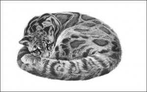 serenity - clouded leopard - mounted