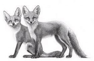 little foxes - mounted