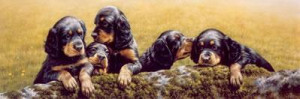 don't tell the others - gordon setter pups - mounted