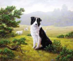 ever watchful - border collie - print