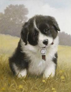 Timeout! - Border Collie Pup - Print